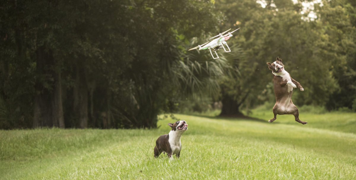 drone-dogs-1
