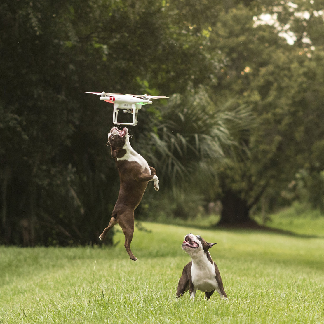 drone-dogs-2