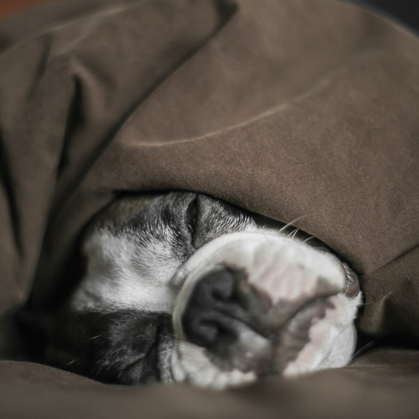 juan-perro-blankets