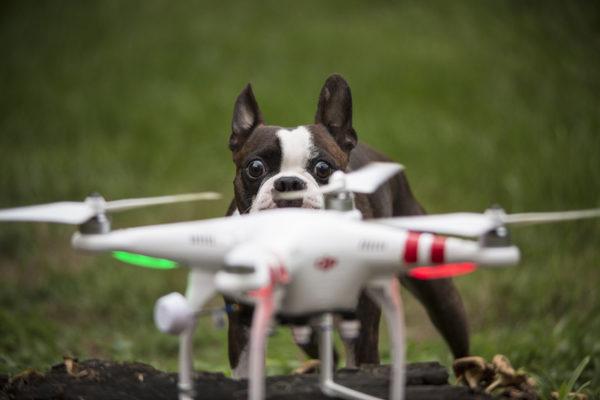 juan-perro-drone