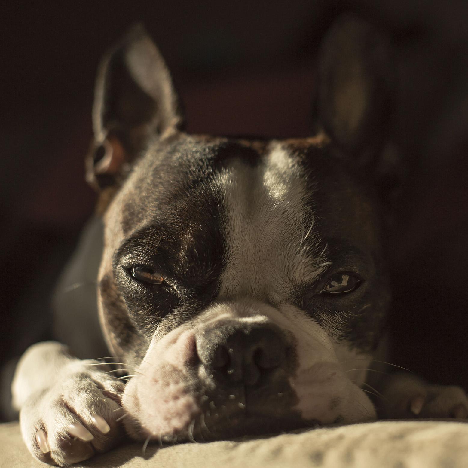 juan-perro-nap-time