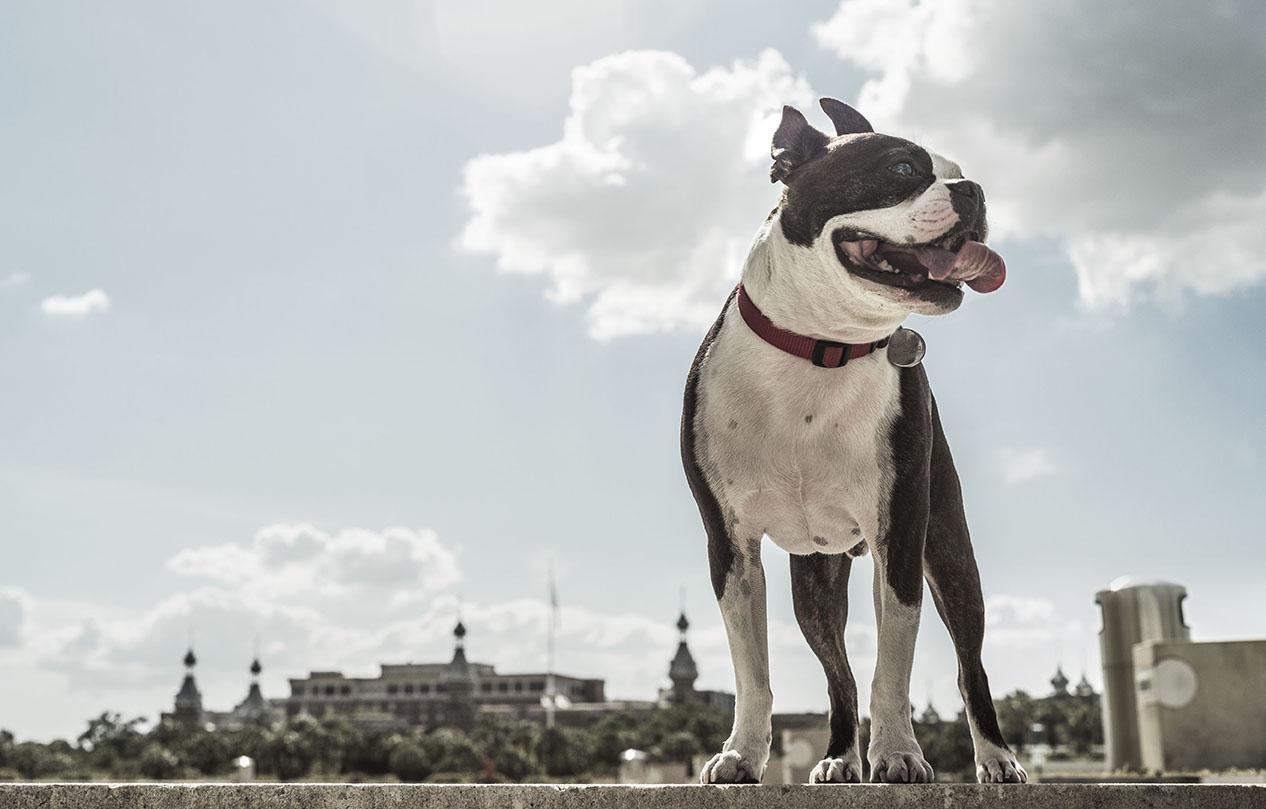 juan-perro-top-dog