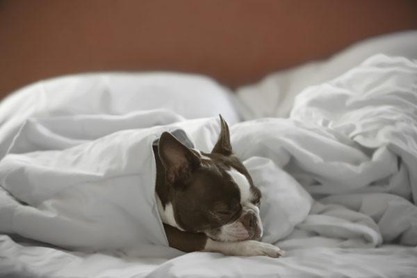 maria-perra-blanket-burrito