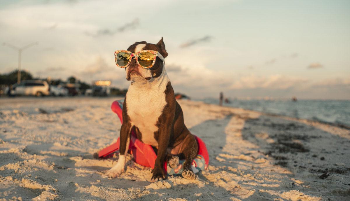maria-perra-salty-dog